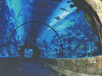Mandalay Bay SharkReef Tunnel Las Vegas